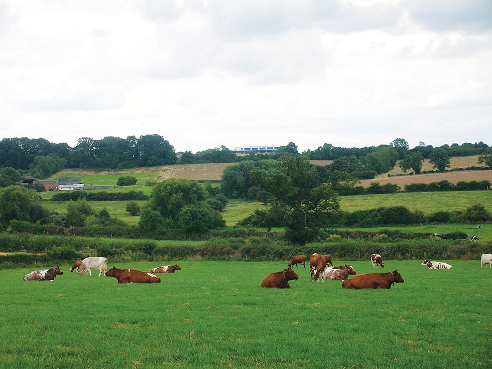 Brookside Herd