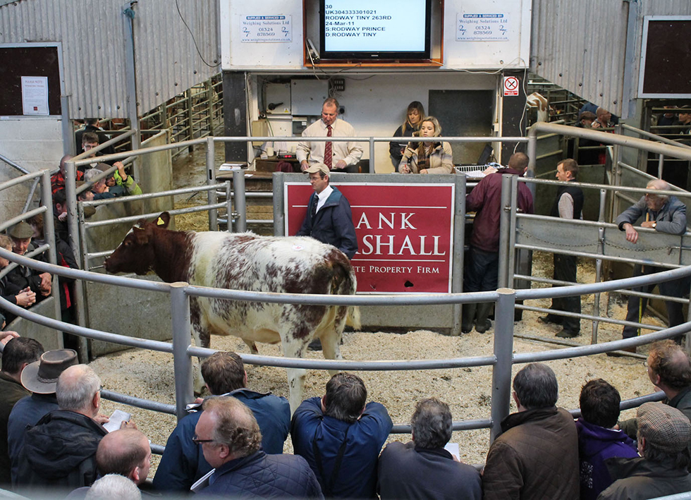 Society Autumn Show & Sale Chelford - 21st October 2013