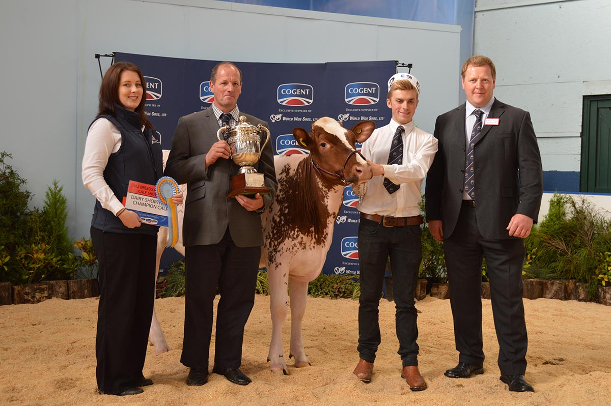 All Breeds All Britain Calf Show 2014 - Reserve Champion - Cotonhall Eclipse Meadow Queen by R Kite