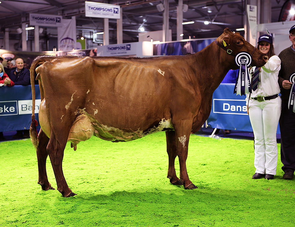 Royal Ulster Winter Fair 2014 - Champion & Res Interbreed Champion Monasterois Jennie Deans 8 from Michael Manley