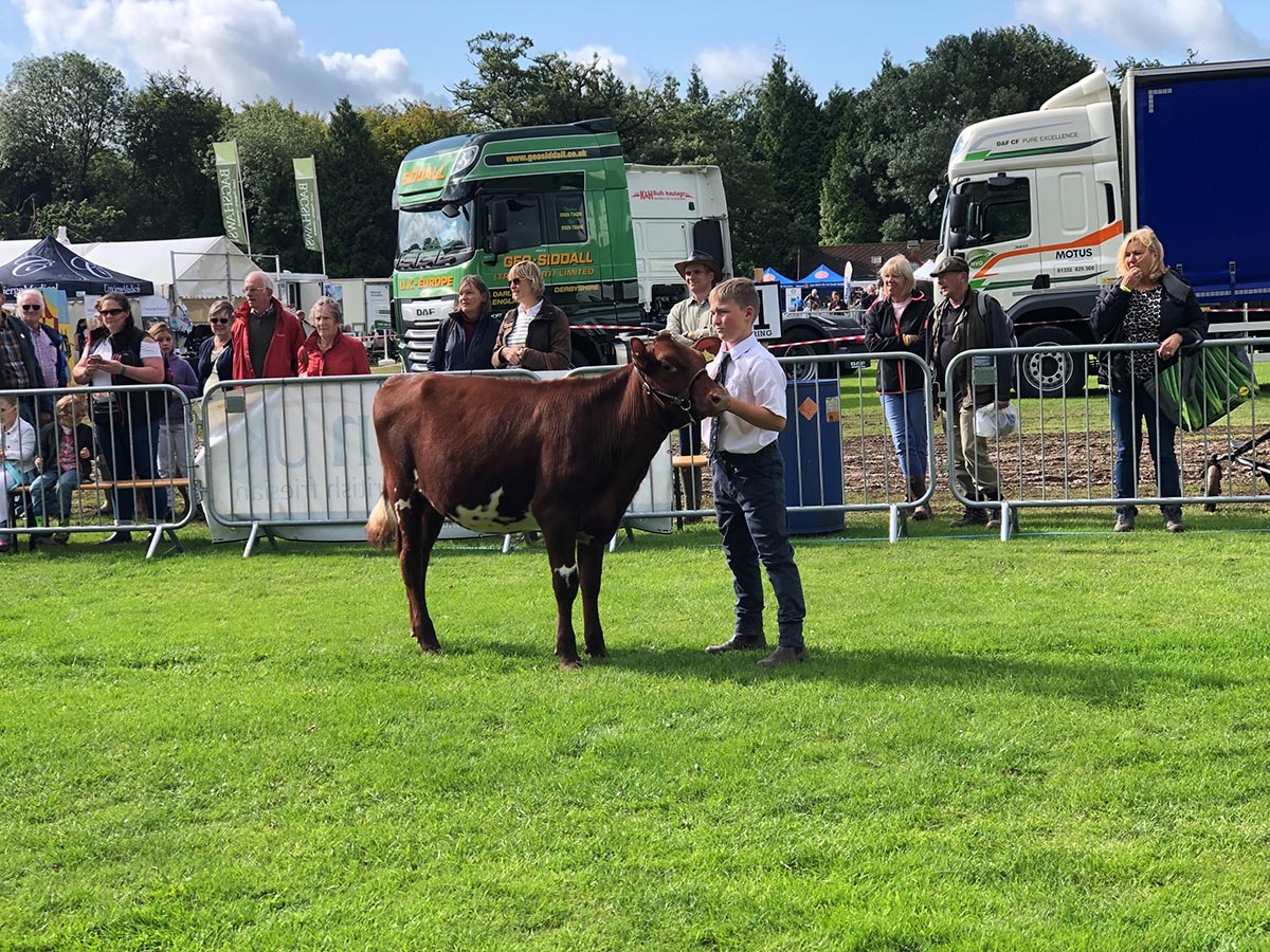 Cotonhall Duchess Ann won reserve champion and 1st Cup winner