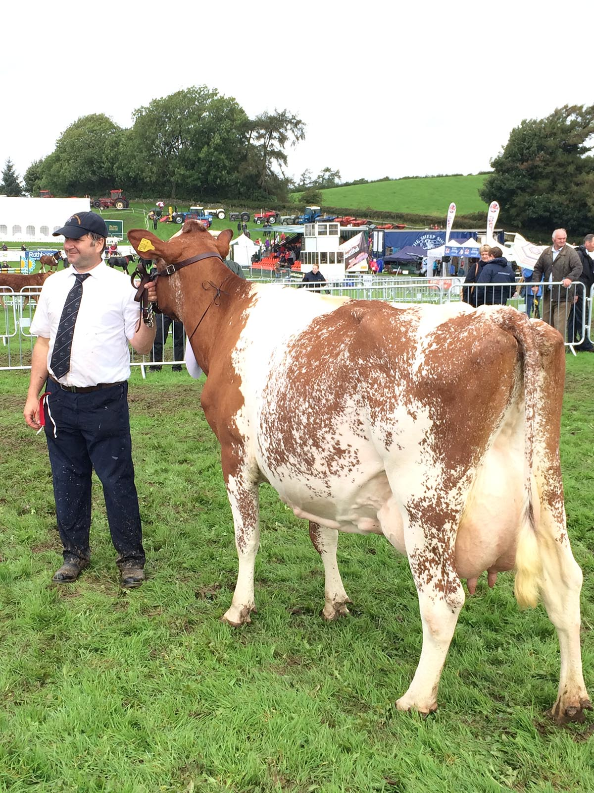 Reserve Champion: Strickley Fillpail 12 from Messrs Robinson
