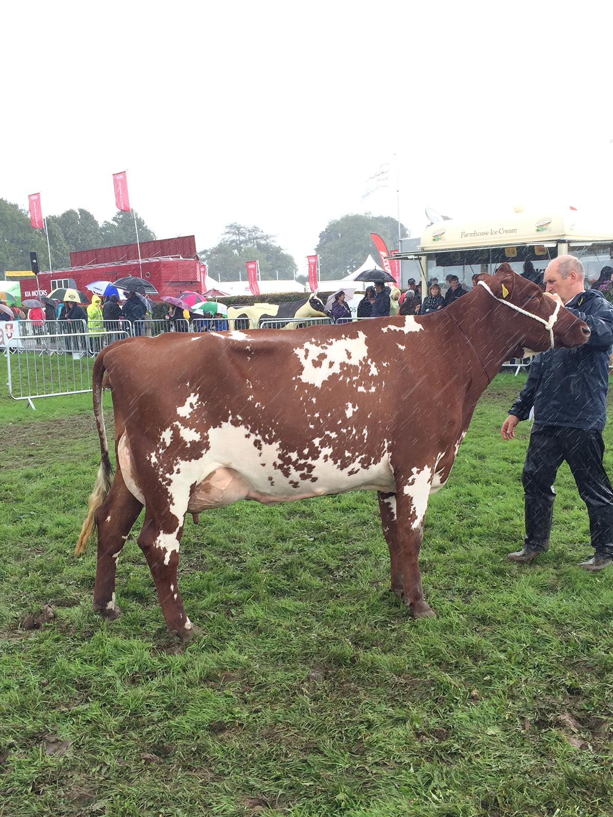 Junior Champion: Marleycote Songstress 20 from GG Baynes & Son