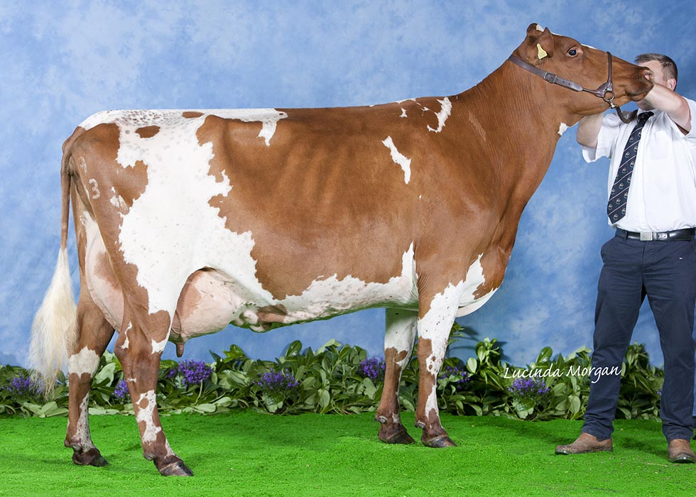 All Breeds All Britain Calf Show 2014 - Champion - <strong>Tabley Moss Rose by B & E Whittaker